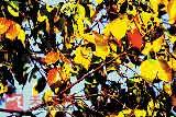 秋天的踪迹4